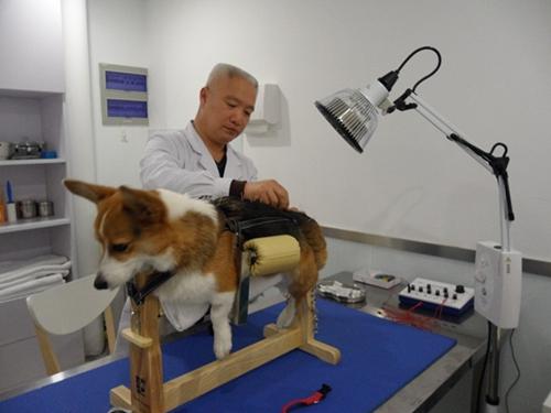 宠物身体瘫痪了用什么方法治疗