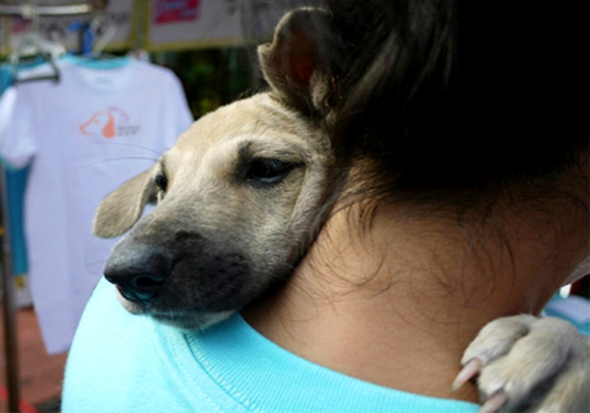 武汉派多格宠物学校携手小动物保护协会助力橙丝带公益