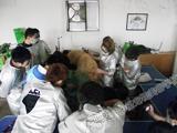 派多格学校2011年第九期金毛美容实操