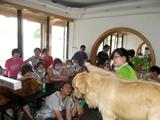 2011年第五期金毛美容示范课