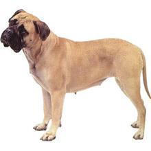 男人如何和动物性交_壁纸 动物 狗 狗狗 220_220