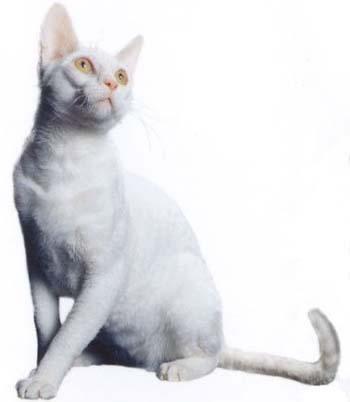 壁纸 动物 猫 猫咪 小猫 桌面 350_402
