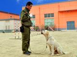 派多格宠物训犬培训
