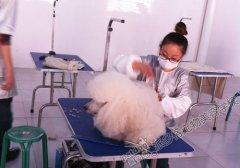 北京宠物美容学校第48期巨贵美容实操