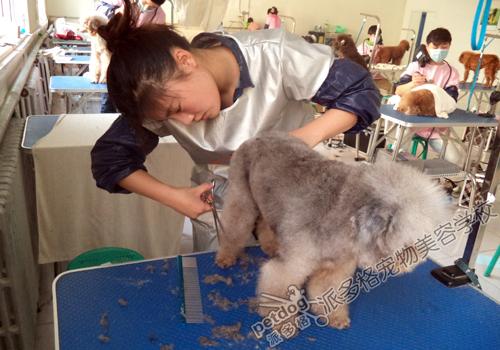宠物/派多格商学院做为宠物行业至高的培训机构,成功铸就了一批又...