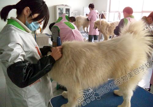 西安有沒有學美容,化妝的學校_錦州哪個寵物店美容好_常熟有寵物美容學校嗎