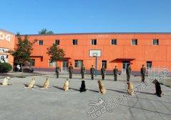 派多格训犬第五期训犬课堂