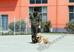 派多格训犬第五期训犬课堂——口令训练