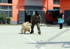 派多格训犬第五期训犬课堂——动作训练