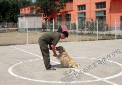 派多格训犬第五期训犬课堂——握手训练