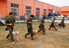 派多格训犬第6期牵犬训练课堂