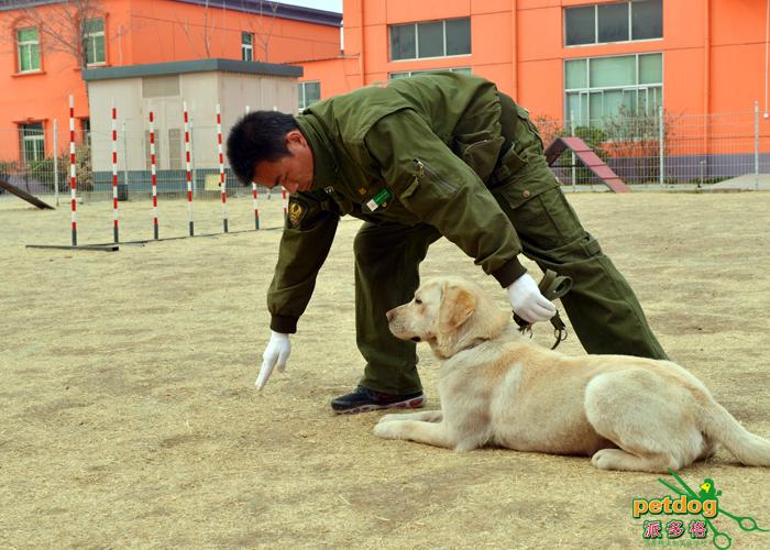 宠物狗狗不良行为纠正的方法