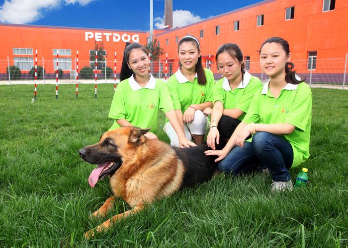 女生学训犬师怎么样_派多格宠物美容培训学校