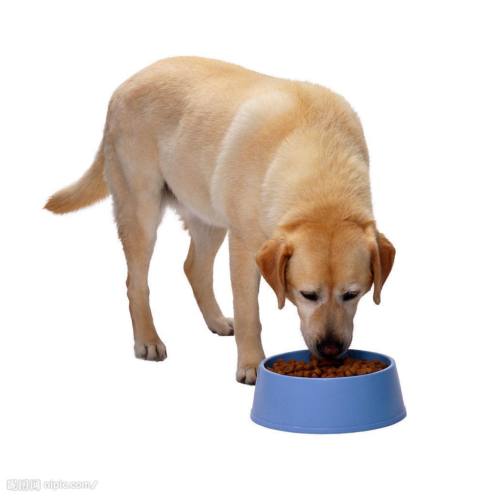 宠物偷吃桌上东西素材