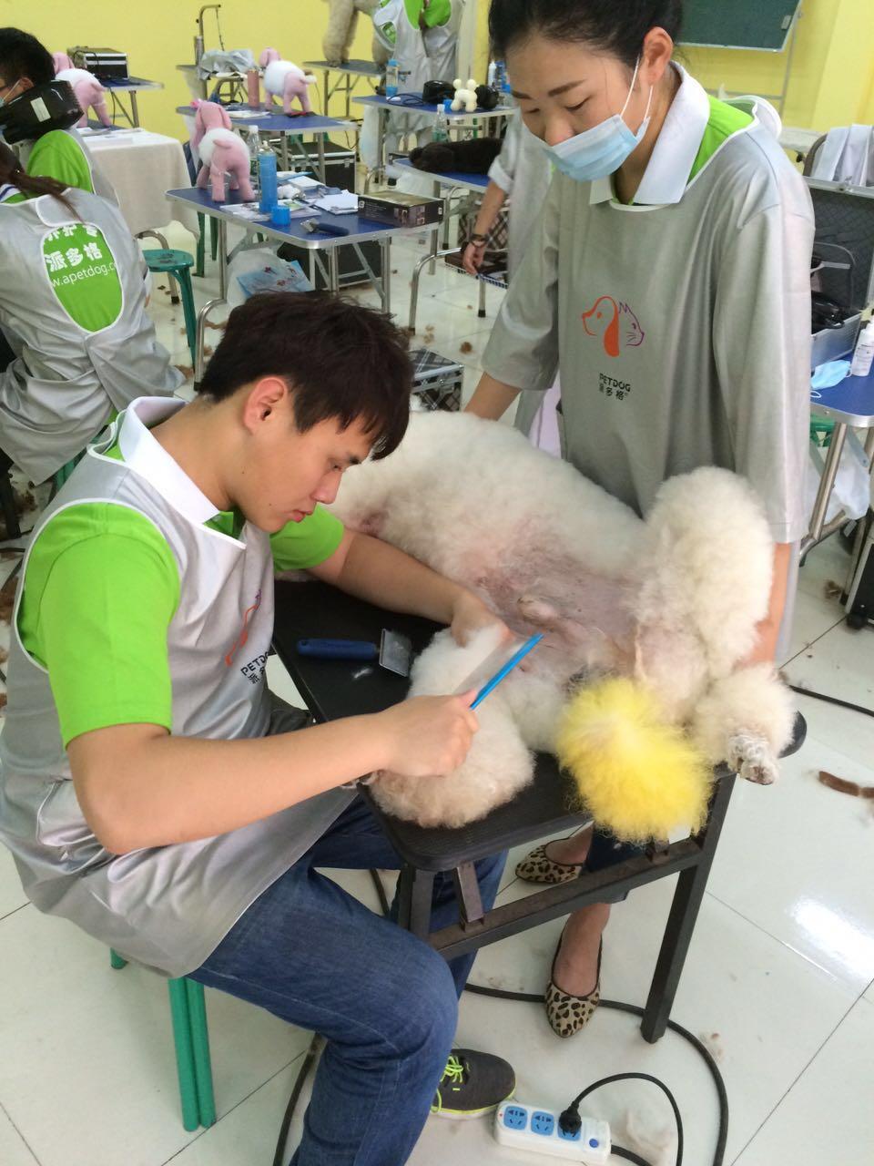 专业宠物美容培训学校哪家比较好-沈阳晶点宠物美容培训学校