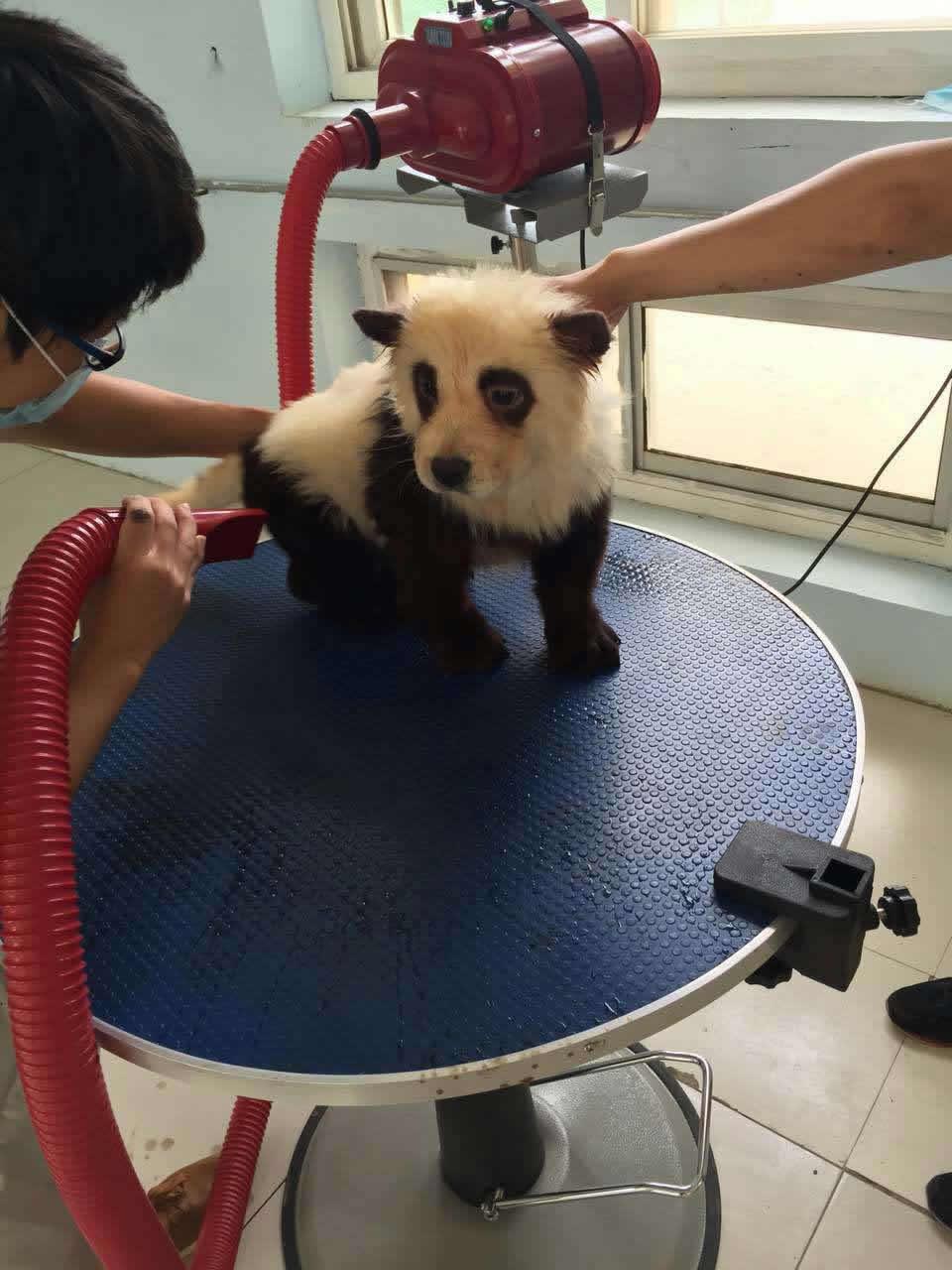 动物的样子,其中憨态可掬的熊猫妆一出现就吸引了